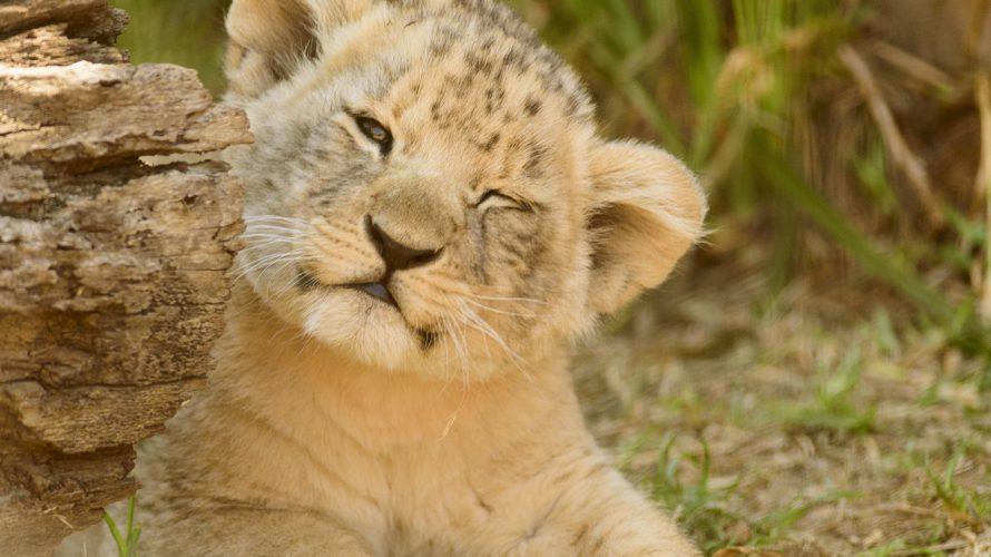 動物の赤ちゃんの呼び方
